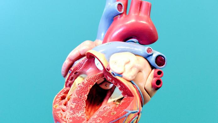 Een menselijke hart.