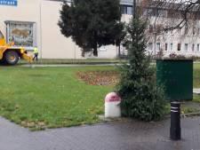 Doorn in het oog van de familie Janssen is nu kerstboom bij raadhuis in Groesbeek