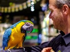 Koko begroet elke bezoeker met 'hoi' en steekt dan een pootje omhoog