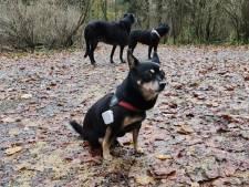 'Honden aan de lijn in Kralingse Bos'