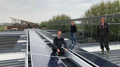 """Vogelopvangcentrum investeert in zonnepanelen: """"Ons energieverbruik is hoog, het hele jaar door"""""""