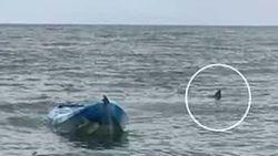"""""""Haar geschreeuw was huiveringwekkend"""": vader redt tienerdochter van 4,5 meter grote witte haai"""