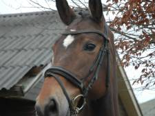 Eén van de verdwenen paarden in Nuenen terecht
