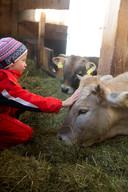 Logeer op een boerderij om geld te besparen