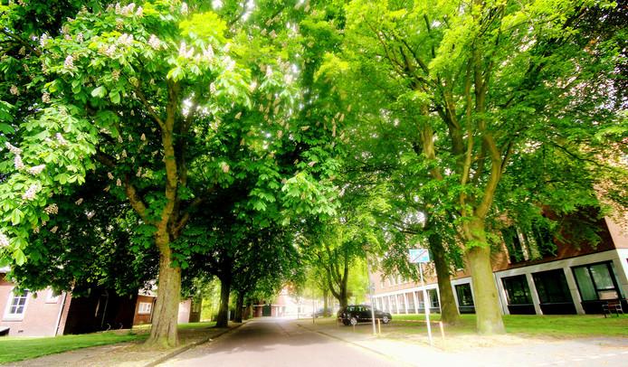 Actiecomité zet zich in voor behoud van bomen in laantje naast gemeentehuis van Losser