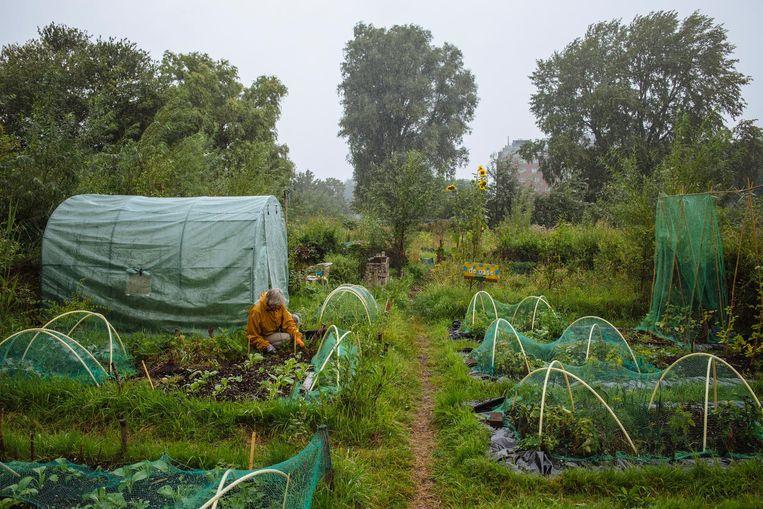 De soeptuin Bredius aan de Zaanstraat beoefent duurzame landbouw, passend in een circulaire stad. Beeld Marc Driessen