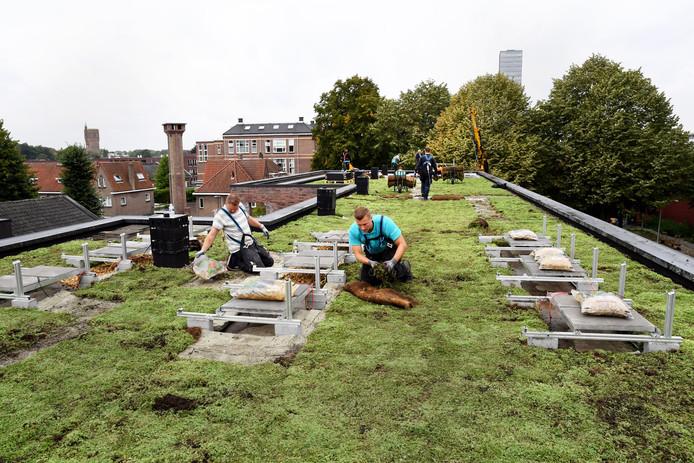 De medewerkers van 'Grijs naar groen' werken op het dak aan de Elzenstraat