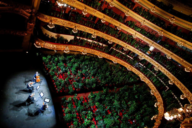 Een strijkkwartet speelt voor een paar duizend potplanten in een schouwburg in Barcelona. Beeld EPA