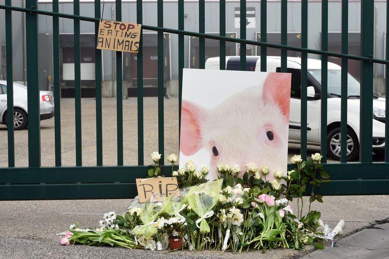 Stil protest van Animal Rights en Gaia aan het slachthuis in Tielt.