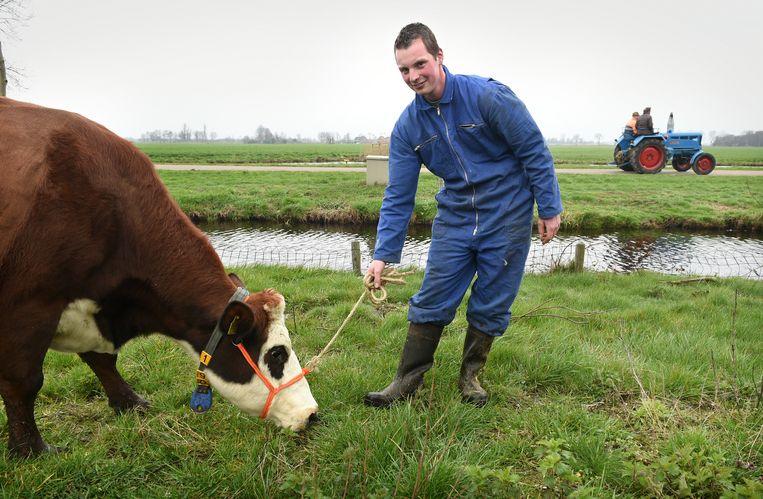 Boer Jan Verduin met een van de 40 blaarkoppen op de proefboerderij in Zegveld, midden in veengebied van het Groene Hart.  Beeld Marcel van den Bergh