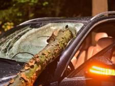 Vallende tak doorboort voorruit auto, bestuurder met spoed naar het ziekenhuis