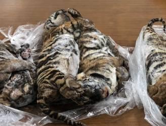 Politie vindt zeven diepgevroren tijgerwelpjes in kofferbak van Vietnamese smokkelaar