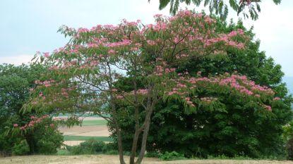 Planten voor het klimaat