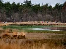 Buntven in Deurne gehalveerd door droge jaren