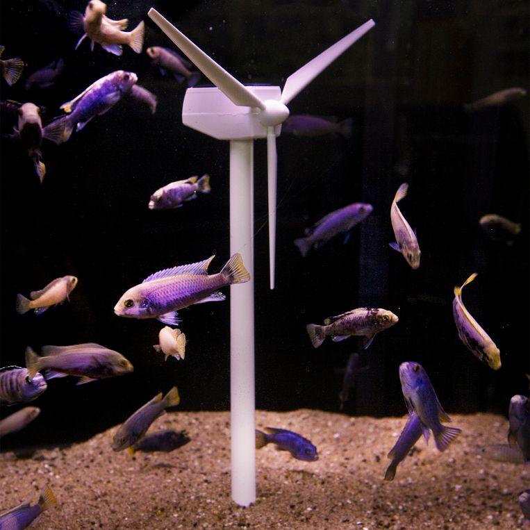 Vissen hebben een goede overlevingskans tussen de windmolens die op zee staan.  Beeld Pauline Marie Niks