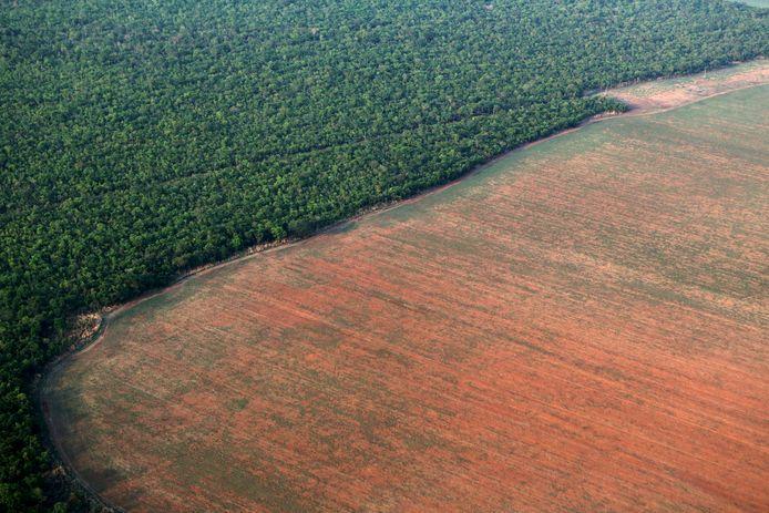 Le Brésil est le pays ayant enregistré la plus grande disparition de forêt primaire en 2019, avec près d'un tiers des pertes totales (1,4 millions d'hectares).
