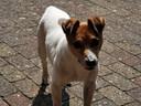 Spike (alias Piemeltje) van Sjon Renshoff uit Sint-Michielsgestel.
