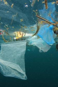 Expositie over 'plastic soup' in zeehondencentrum Stellendam