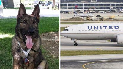 Luchtvaartmaatschappij maakt enorme blunder: hond naar Japan in plaats van Kansas City gevlogen