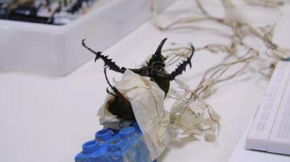 Worden we binnenkort gered door cyborgkevers?