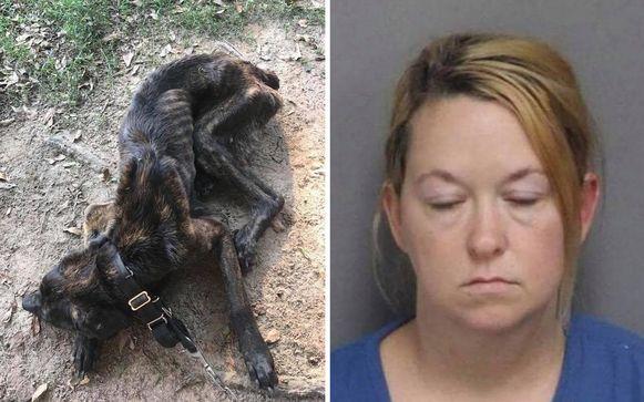 Terwijl ze haar andere honden wel bleef voeden, gaf Elizabeth geen eten en drinken meer aan Champ, omdat ze boos was op haar ex-vriend.