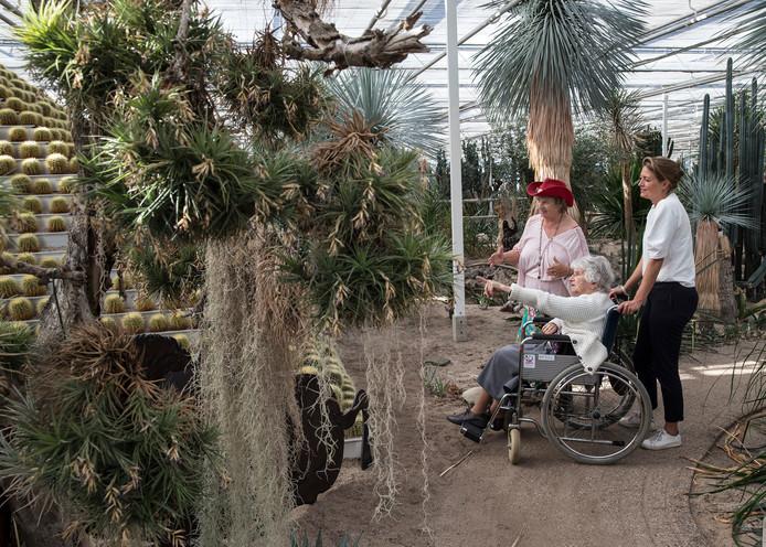 Mevrouw Hek geniet van de toer langs de cactussen met uitleg van Anny van der Meer van Cactusoase, terwijl ze wordt begeleid door wethouder Ilse Saris van de gemeente Winterswijk.