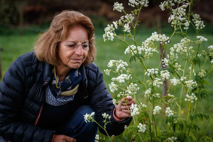 Sylvia Hellingman vreest dat de overlast door de eikenprocessierups alleen maar groter wordt als er niet wordt ingegrepen.