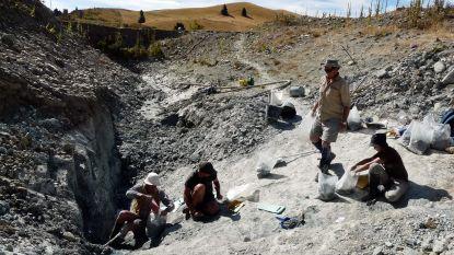 Fossielen van grote uitgestorven vleermuis gevonden in Nieuw-Zeeland