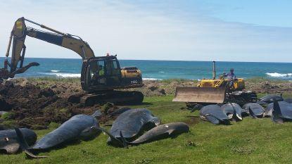 Massale walvisstrandingen in Nieuw-Zeeland mogelijk veroorzaakt door warmere oceaan