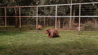 Nieuwe beren niet langer in quarantaine