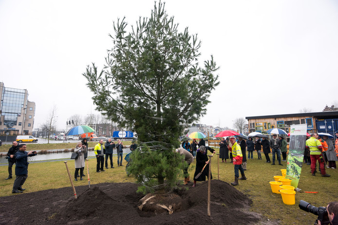 Wethouder Geldof en vicevoorzitter van HKU Majoor planten een boom op de Nieuwekade.
