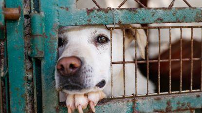 Aantal inbeslagnames mishandelde dieren in Wallonië stijgt opmerkelijk