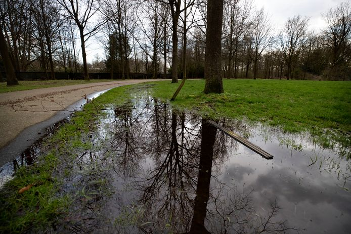 Een van de bomen in het Keiebijtersbos in het Helmondse stadspark De Warande en een vernield paaltje.