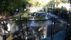 Oeps! Uber-chauffeur parkeert wagen... in zwembad