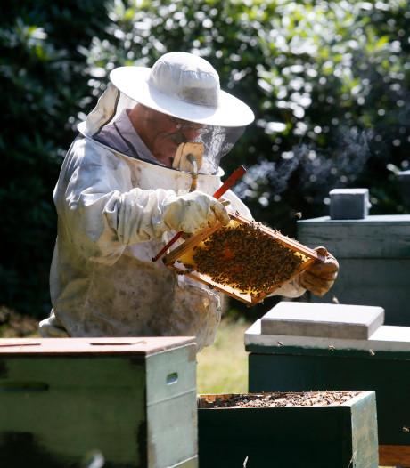 Spieken in de bijenkasten in Zoetermeer en Benthuizen