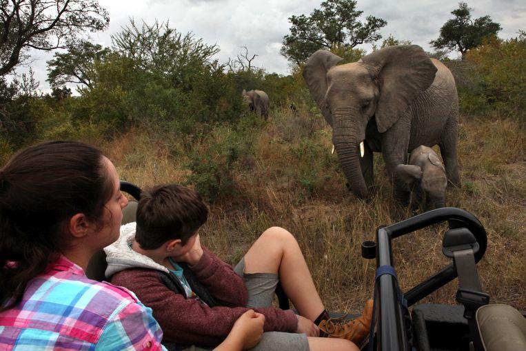 Toeristen bekijken een olifant en haar jong in een reservaat in Zuid-Afrika.  Beeld Getty Images