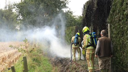 Wespenverdelging loopt uit de hand: haag gaat in vlammen op
