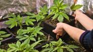 """Mijn geheim. Danny wordt veroordeeld voor cannabis kweken: """"Ik zou bij elke oogst vijfduizend euro verdienen. Natuurlijk zei ik ja"""""""