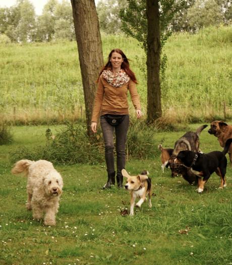 'Als ze loslopen reageren honden beter op elkaar'