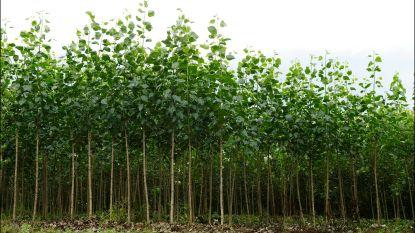 Elke inwoner van Lochristi een boom? Dit weekend afhaling voor wie reserveerde