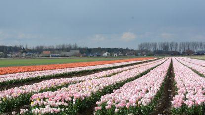 China in de war over 'naamsverandering' Nederland