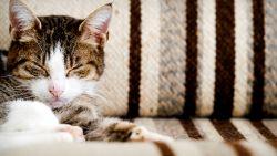 Ook 'propere' huiskat kan je gezondheid schaden: zelfs een likje is niet ongevaarlijk