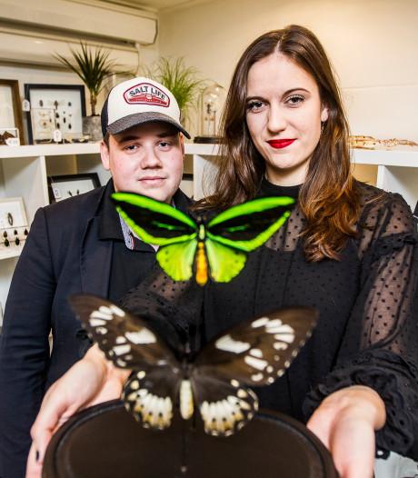 Nieuwe winkel in Olst heeft 15.000 (opgezette) vlinders en insecten uit voorraad leverbaar