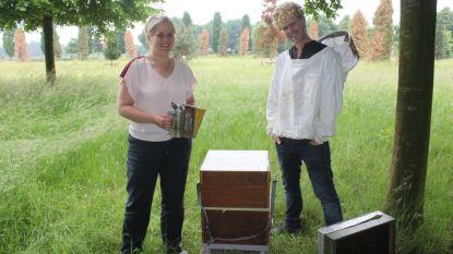 Bijenkasten op natuurlijke begraafplaats