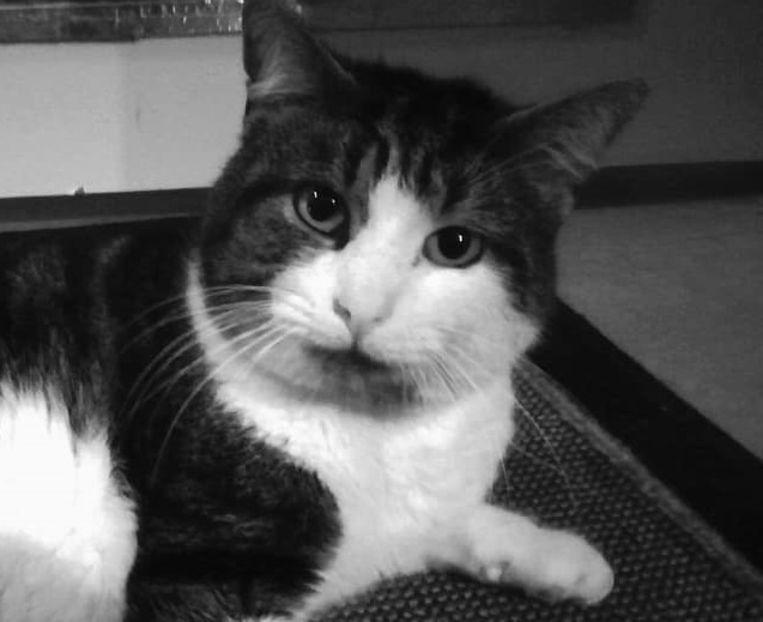 De helaas overleden James, kat van Maxime