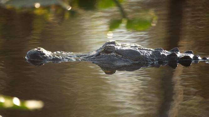 Agressieve stiefvader in de cel omdat hij dreigde jongetje (8) aan alligators te voeren