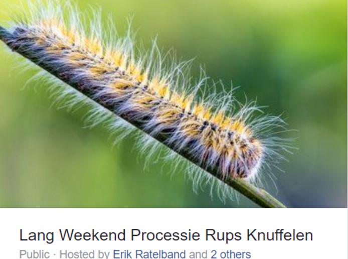 Evenement Lang weekend processierups knuffelen in Rijen gaat niet door