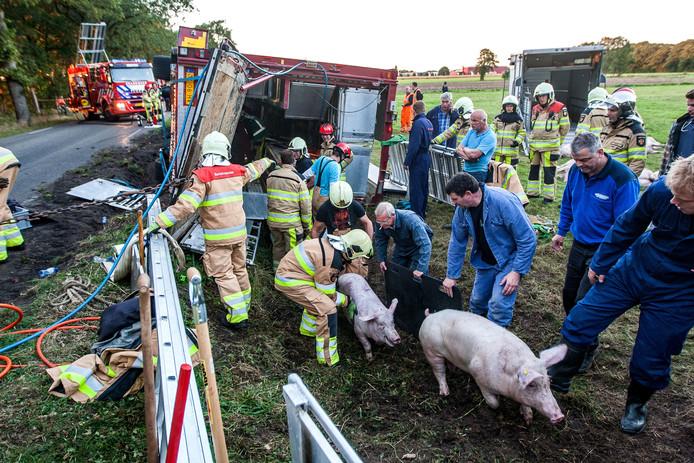 Vrachtwagen vol met varkens gekanteld in Heeten.