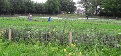 Toch plek voor voedseltuin in Oosterhout: 'Een prachtig initiatief'