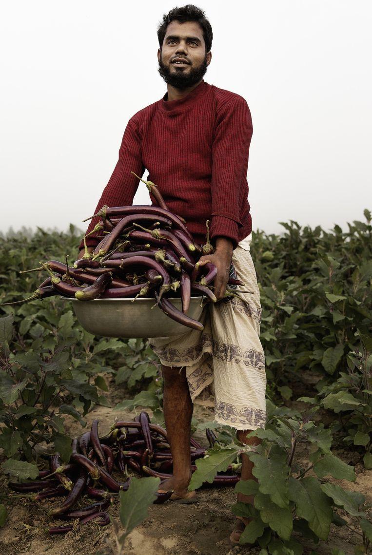 Moinul Islam, een boer in Sadullapur, oogst de genetisch gemodificeerde aubergines die hij dit jaar voor het eerst verbouwt. Hij is blij met het gewas. Beeld Daniel Rosenthal
